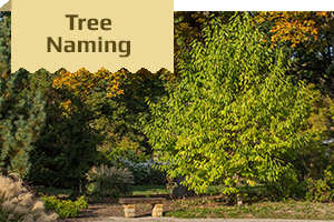 Tree Dedication Image
